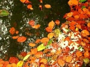 Pond In Autumn