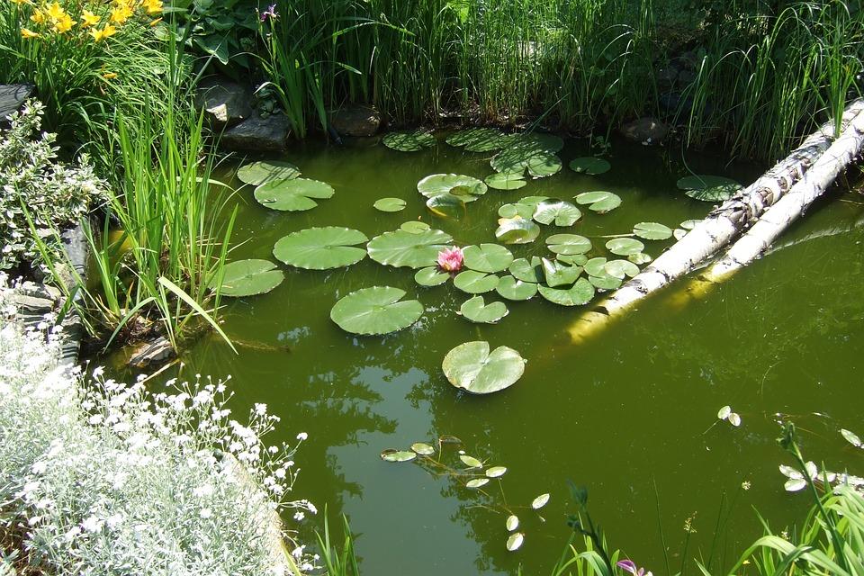 garden-248445_960_720