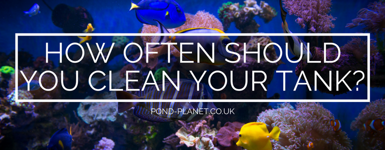 How often should i clean my tank for How long does fish oil stay in your system