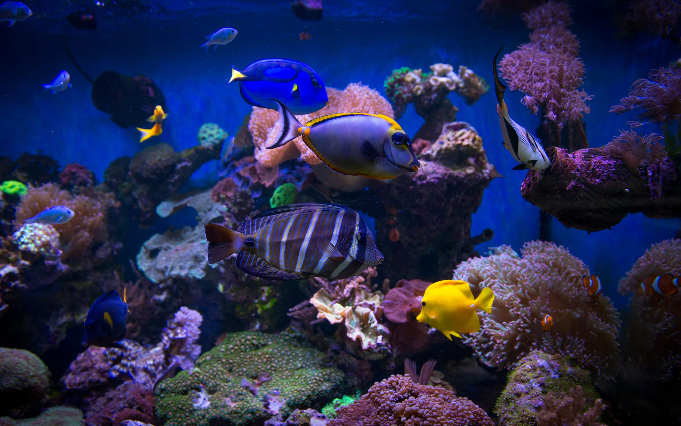 How often should i clean my tank for How often do you clean a fish tank