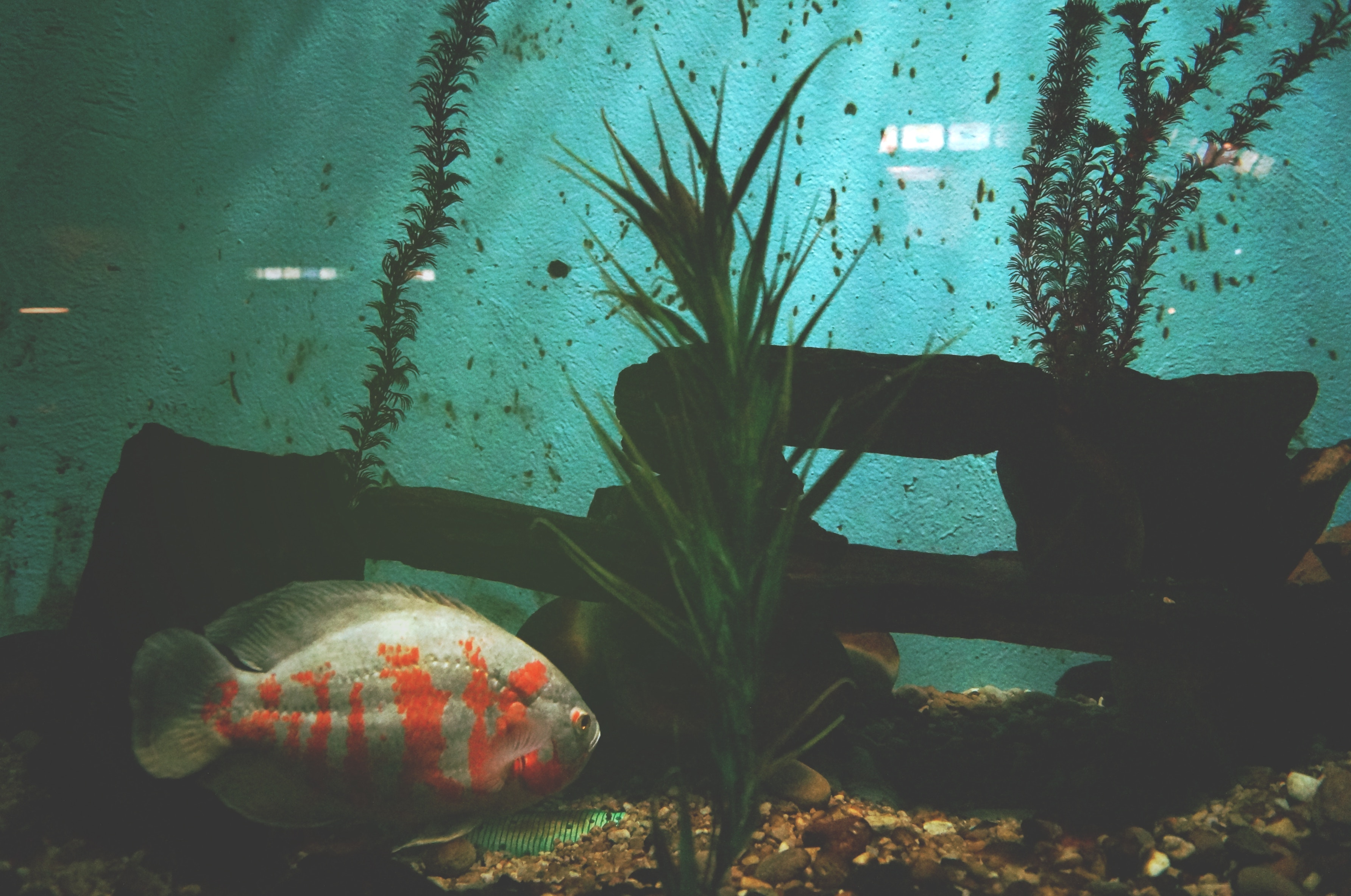 Do I Need Planets in My Aquarium? | Pond Guides | Pond Planet