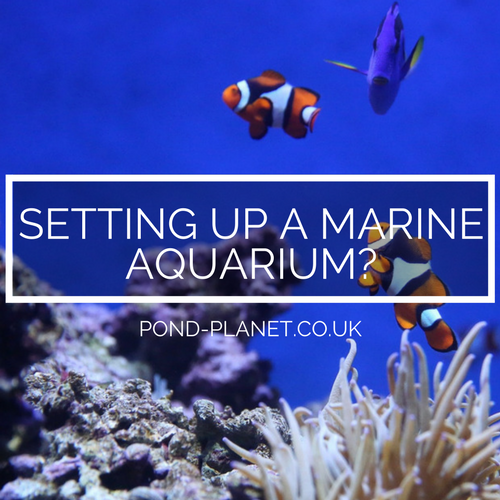 Thinking Of Setting Up A Marine Aquarium? Read This First