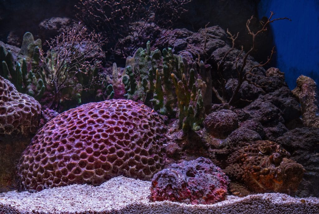 Corals and rock
