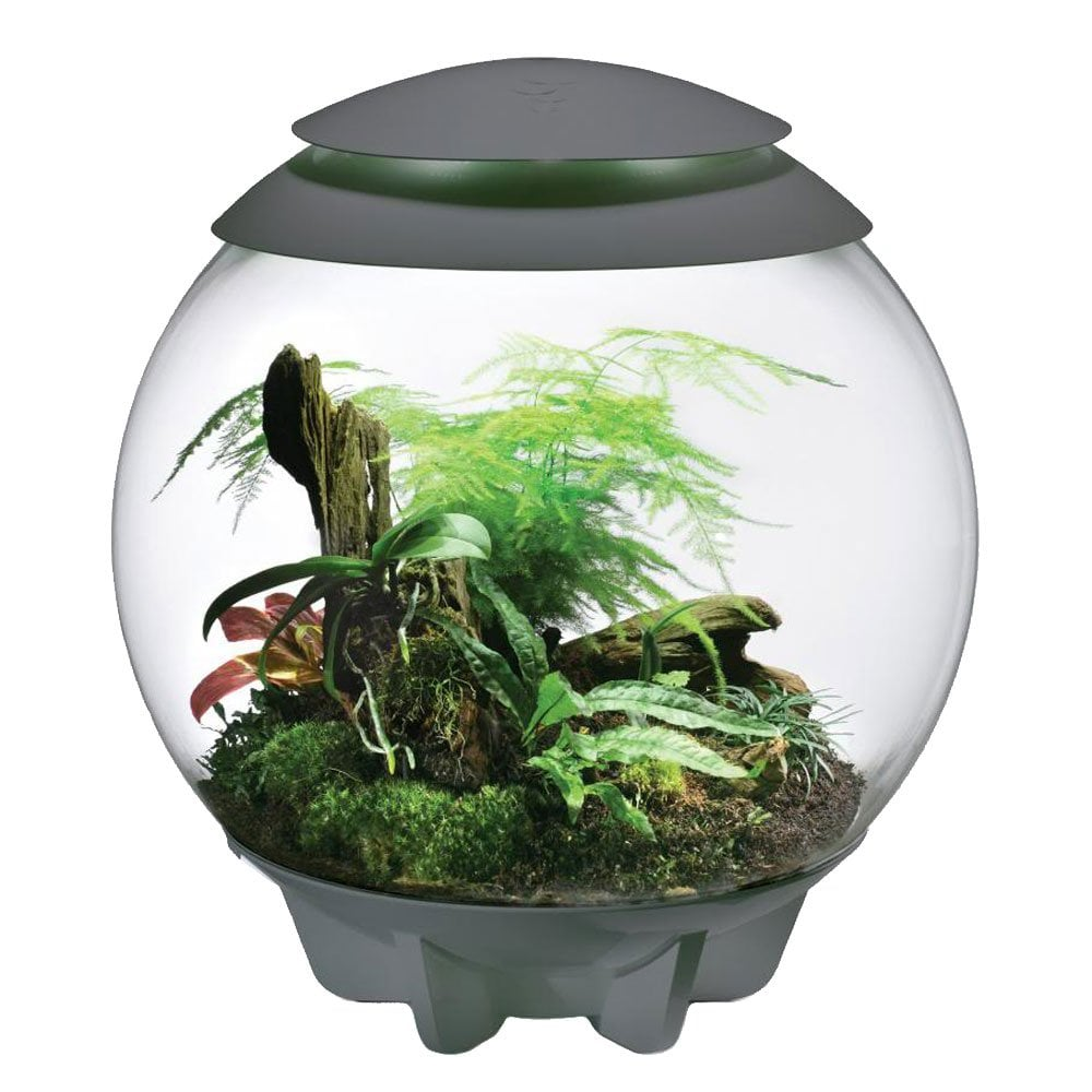 Biorb Air Terrarium Grey Reptiles From Pond Planet Ltd Uk