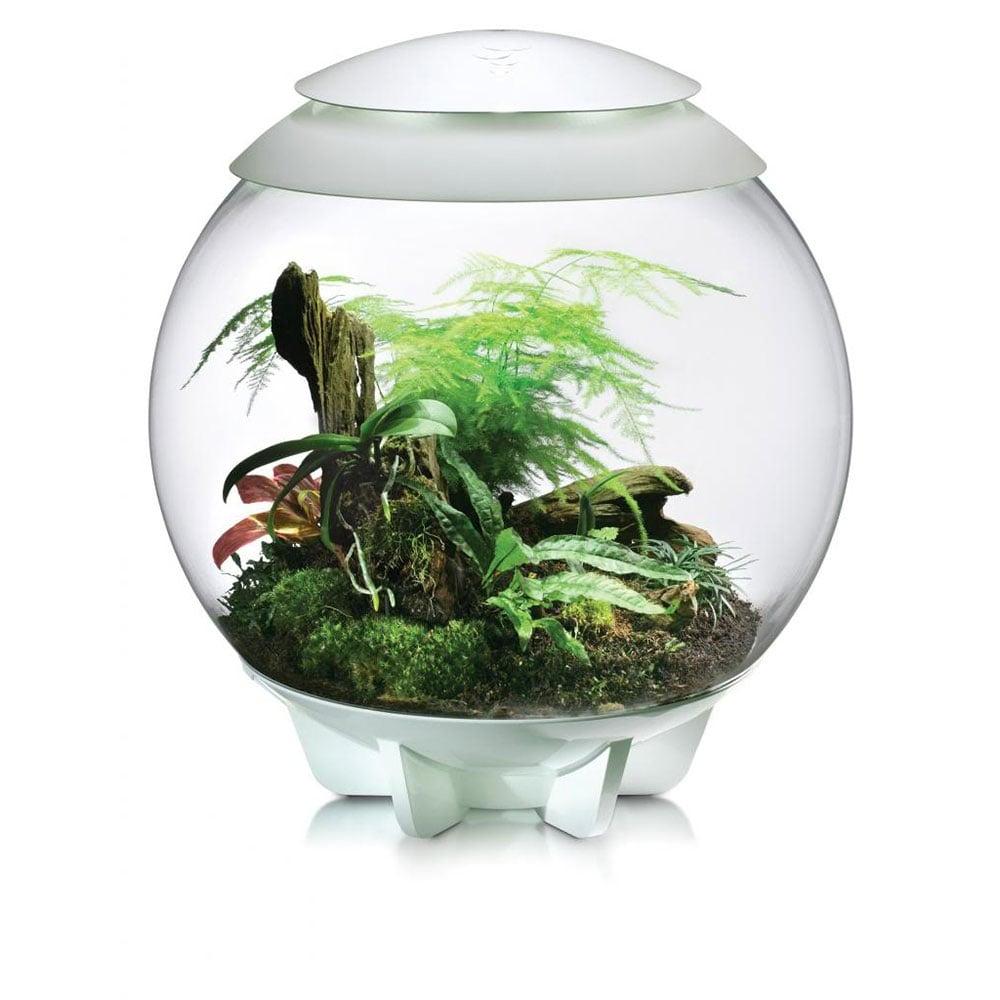 Biorb Air Terrarium White Reptiles From Pond Planet Ltd Uk