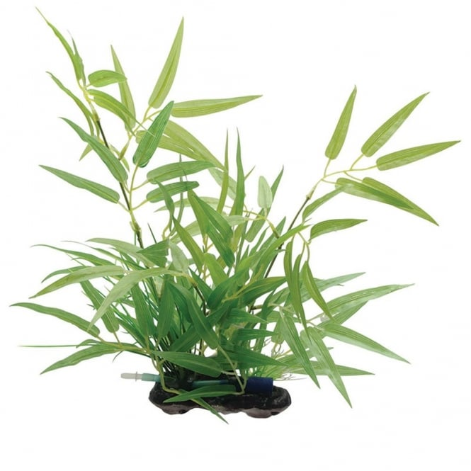 Bamboo Shoots Plant 35cm