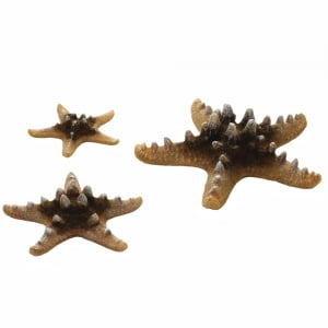 Sea Star Set - Natural