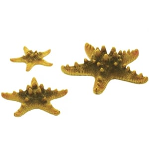 Sea Star Set - Yellow