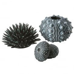 Sea Urchins Set - Black