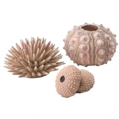 Sea Urchins Set - Natural