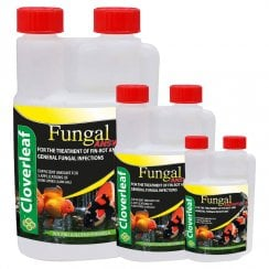 Fungal Answer