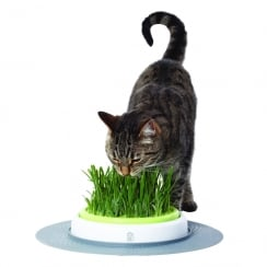 Design Senses Grass Garden Kit