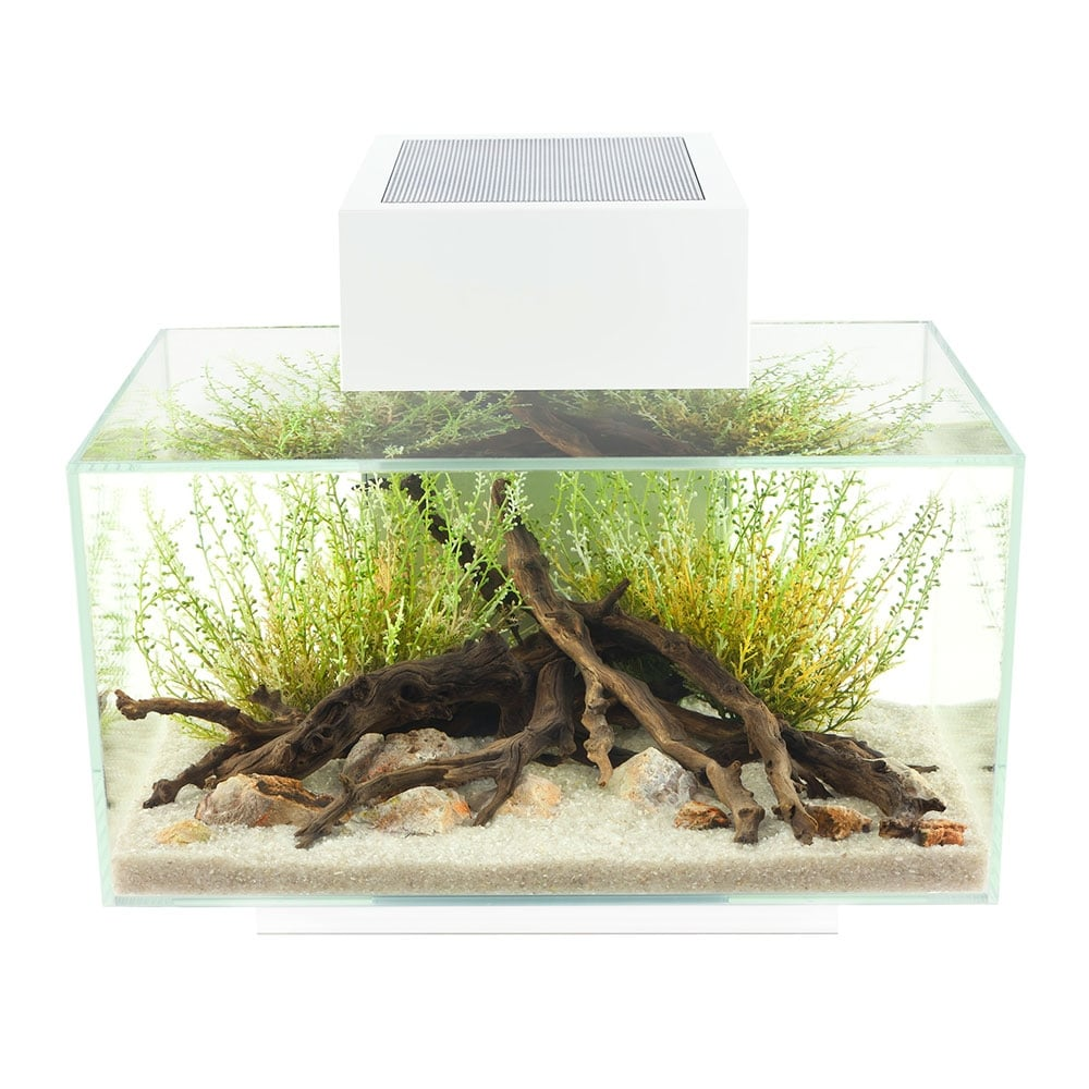 Fluval edge 23l aquarium set white fluval from pond for Aquarium fish for pond