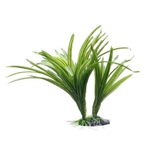 Striped Acorus Plant 25cm