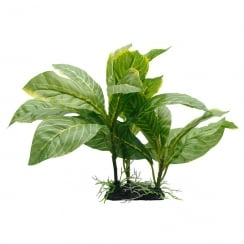 Yellow Striped Spathiphyllum Plant 22cm