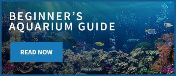 Beginners Aquarium Guide